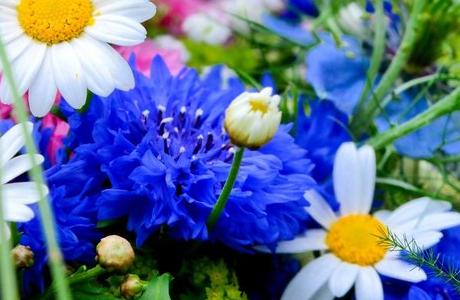 Как возникли цветы растений: эволюция строения цветка