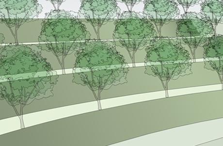 Высаживание деревьев на склонах