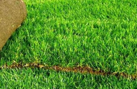 Виды и характеристики рулонных газонов