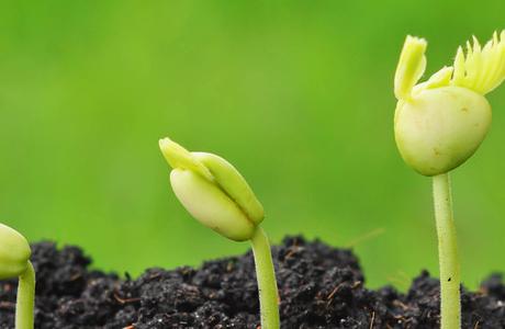 Семена растений и их особенности