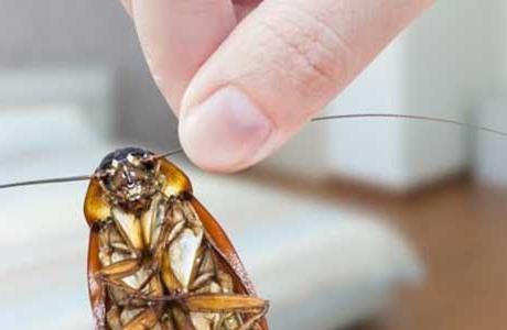 Тараканы - осторожность не будет помехой