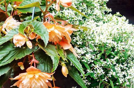 Эуфорбия, или молочай: виды и сорта, выращивание и уход за растением