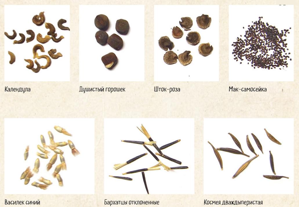 сервис, слово семена в картинках мороза
